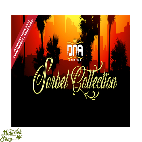 DNA Genetics - The Sorbet Collection