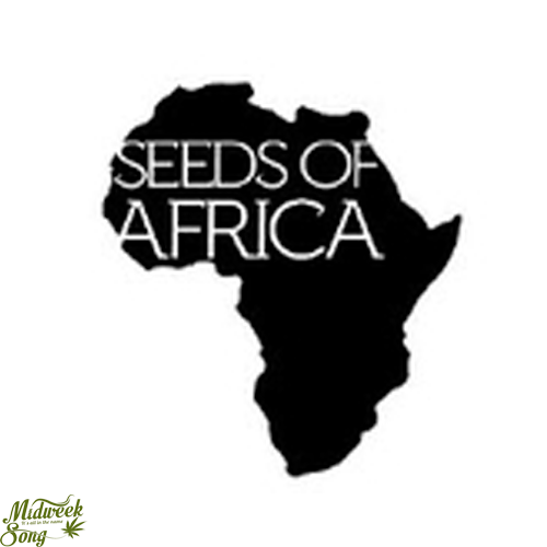 Seeds of Africa