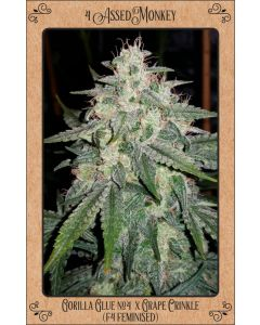 Mephisto Genetics – 4 Assed Monkey Cannabis Seeds