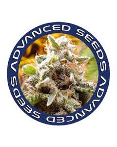 Advanced Seeds – Feminized Collection #3 Marijuana Seeds