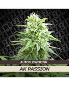 Zambeza - AK Passion Auto Cannabis Seeds