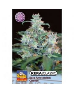 Kera Seeds – Amsterdam Cheese Cannabis Seeds