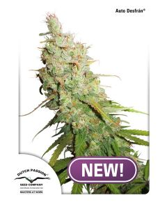 Dutch Passion – Auto Desfran Cannabis Seeds