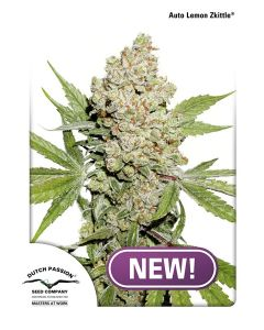 Dutch Passion – Auto Lemon Zkittle Cannabis Seeds