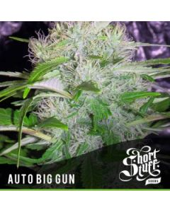 Short Stuff – Auto Big Gun Marijuana Seeds