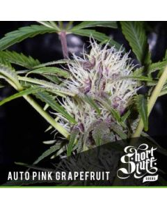 Short Stuff – Auto Pink Grapefruit Marijuana Seeds