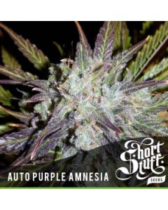 Short Stuff – Auto Purple Amnesia Cannabis Seeds