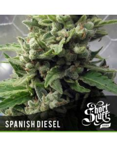 Short Stuff – Auto Spanish Diesel Marijuana Seeds