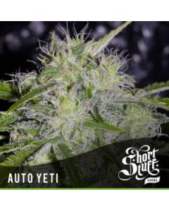 Short Stuff – Auto Yeti Marijuana Seeds