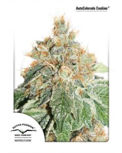 Dutch Passion – Auto Colorado Cookies Cannabis Seeds