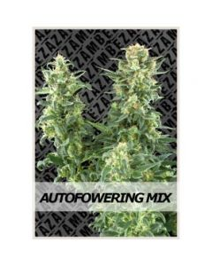 Zambeza - Autoflowering Mix Cannabis Seeds