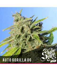 Short Stuff Seeds – Auto Gorilla OG Marijuana Seeds