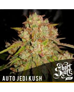 Short Stuff Seeds – Auto Jedi Kush Marijuana Seeds