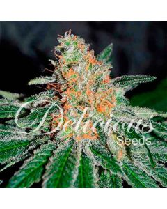 Delicious Seeds – CBD Jam Marijuana Seeds