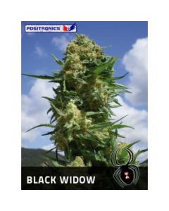 Positronics Seeds - Black Widow Marijuana Seeds