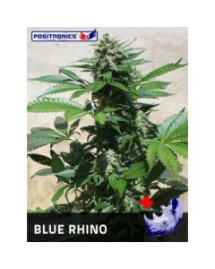 Positronics Seeds - Blue Rhino Marijuana Seeds