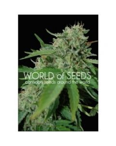 World of Seeds - Brazil Amazonia Cannabis Seeds
