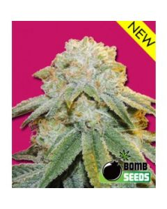 Bomb Seeds - Bubble Bomb