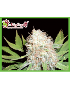Dr Krippling – Bud Bud Bling Tingz Cannabis Seeds