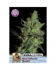 Kera Seeds – California Nugget Cannabis Seeds