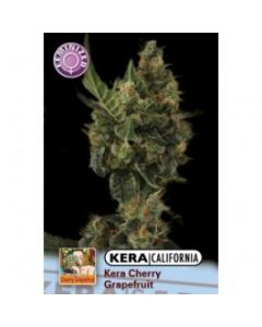 Kera Seeds – Cherry Grapefruit Cannabis Seeds
