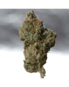 TH Seeds Seeds – Cold Creek Kush Marijuana Seeds