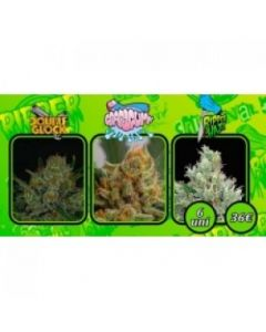Ripper Seeds – Collection 1 Marijuana Seeds