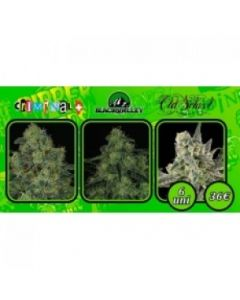 Ripper Seeds – Collection 2 Marijuana Seeds