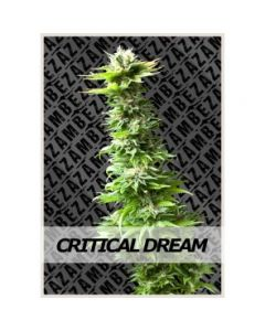 Zambeza - Critical Dream Auto Cannabis Seeds