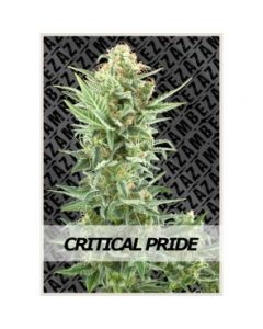 Zambeza - Critical Pride Cannabis Seeds