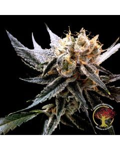 Crockett Family Farms – Crockett's Sour Tangie