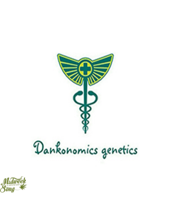 Dankonomics Genetics – Banana Quin Cannabis Seeds