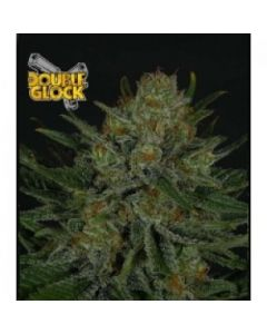 Ripper Seeds – Double Glock Marijuana Seeds