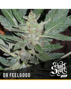 Short Stuff Seeds – Dr. Feelgood Marijuana Seeds