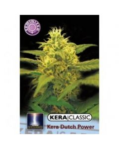 Kera Seeds – Dutch Power 2.0 Cannabis Seeds