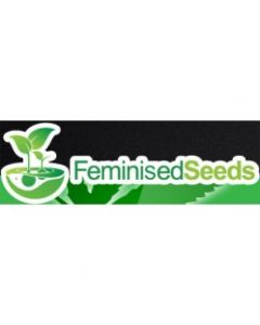 Feminized Seed Company - British Outdoor Mix