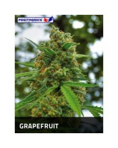Positronics Seeds – Grapefruit Marijuana Seeds