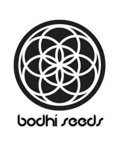 Bodhi Seeds – Black Lotus Cannabis Seeds