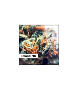 Dispensario Seeds – Island Mango Kush Marijuana Seeds