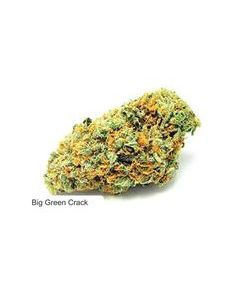 Dispensario Seeds – Big Crack Tsunami Marijuana Seeds
