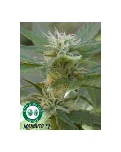 Goodhouse Seeds – Manolito Cannabis Seeds