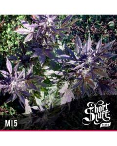Short Stuff Seeds – Mi5 Marijuana Seeds