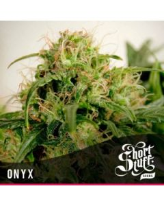 Short Stuff Seeds – Onyx Auto Marijuana Seeds