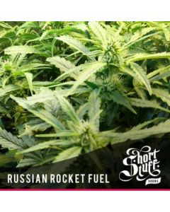 Short Stuff Seeds – Russian Rocket Fuel Auto Marijuana Seeds