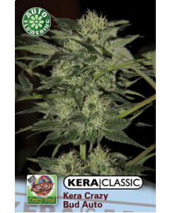 Kera Seeds – Crazy Bud Auto Cannabis Seeds