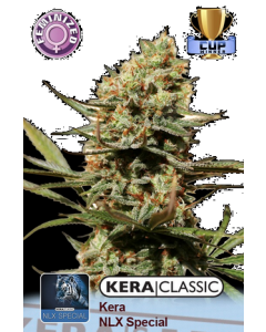 Kera Seeds – NLX Special Cannabis Seeds