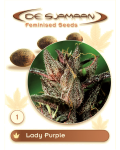 De Sjamaan Seeds - Lady Purple