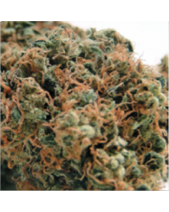Blim Burn Seeds – Chemdog #4 Cannabis Seeds