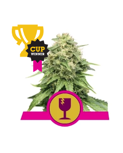 Royal Queen Seeds – Critical Cannabis Seeds