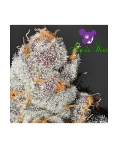 Anesia Scout Cookies